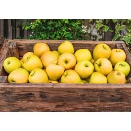 Pomes Golden - Bossa 1kg aprox -