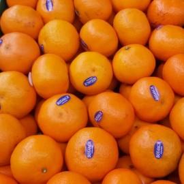 Mandarina clementina (80g unitat)