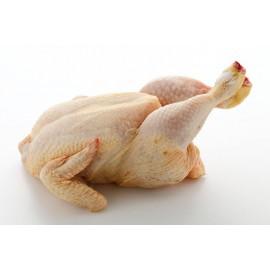 pollastre groc catalâ  1.900kg aprox