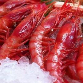 Gamba vermella grossa fresca (safata de 500g aprox)